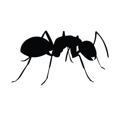 2940-ants