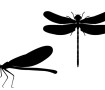 dragonfly-silhouette-vector